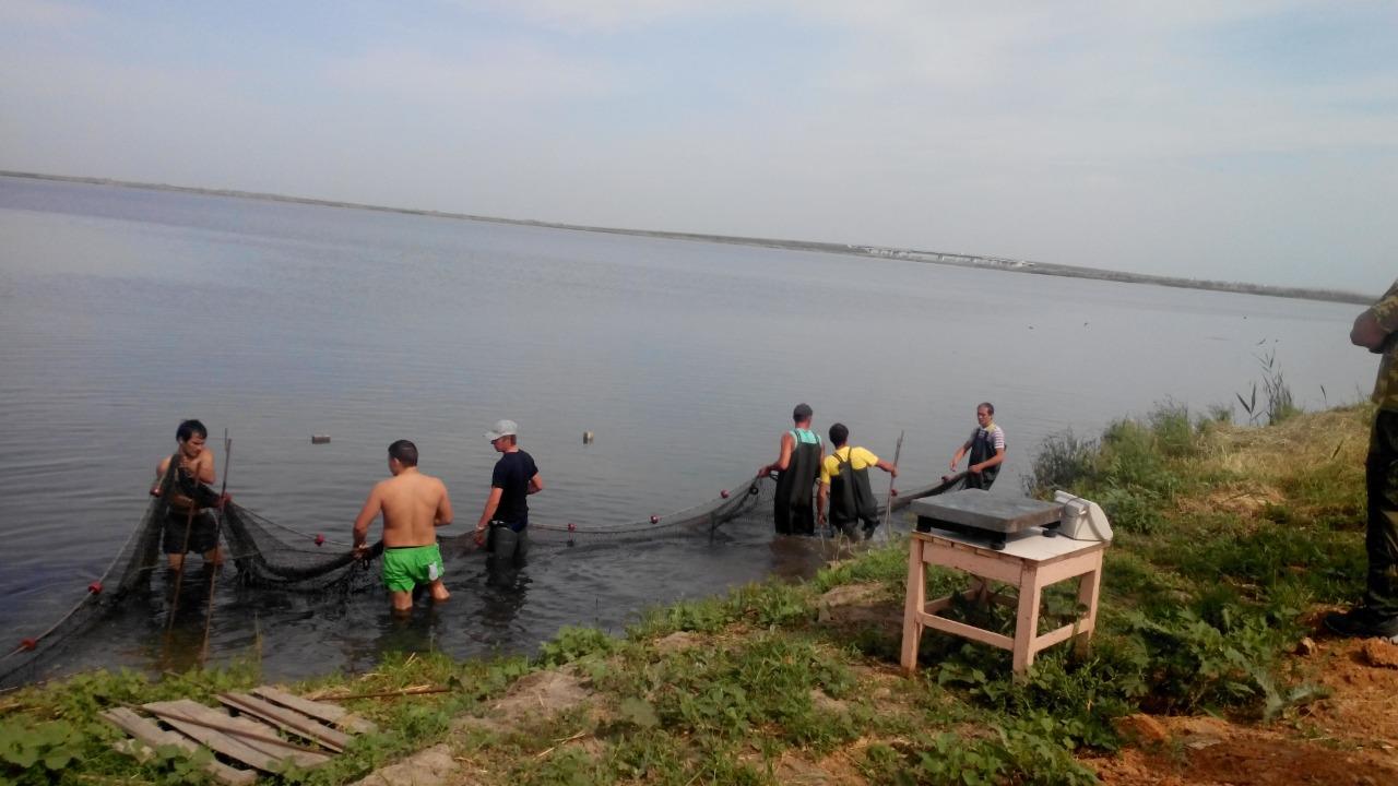 Донские ветврачи отобрали пробы рыбы и рыбной продукции для федерального мониторинга безопасности