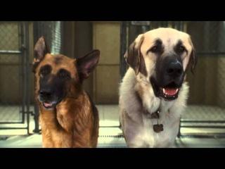 ТНТ-Комедия - Кошки против собак: Месть Китти Галор