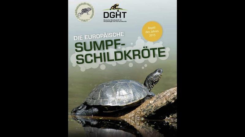 Reptil des Jahres 2015 Die Europäische Sumpfschildkröte DGHT