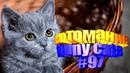 Смешные коты Приколы с котами Видео про котов Котомания 97