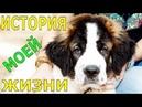 История моей жизни Говорящая собака Собака медведяка Московская сторожевая Булат