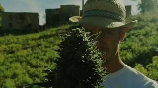 Dub Kraft - Everweed!!!