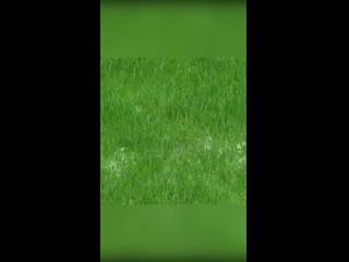 Технология идеальной лужайки у дома в США - видеообзор-