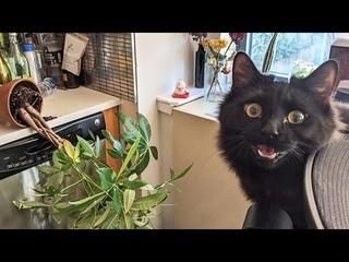 ПРИКОЛЫ С ЖИВОТНЫМИ 😺🐶 Смешные Животные Собаки Смешные Коты Приколы с котами Забавные Животные #84