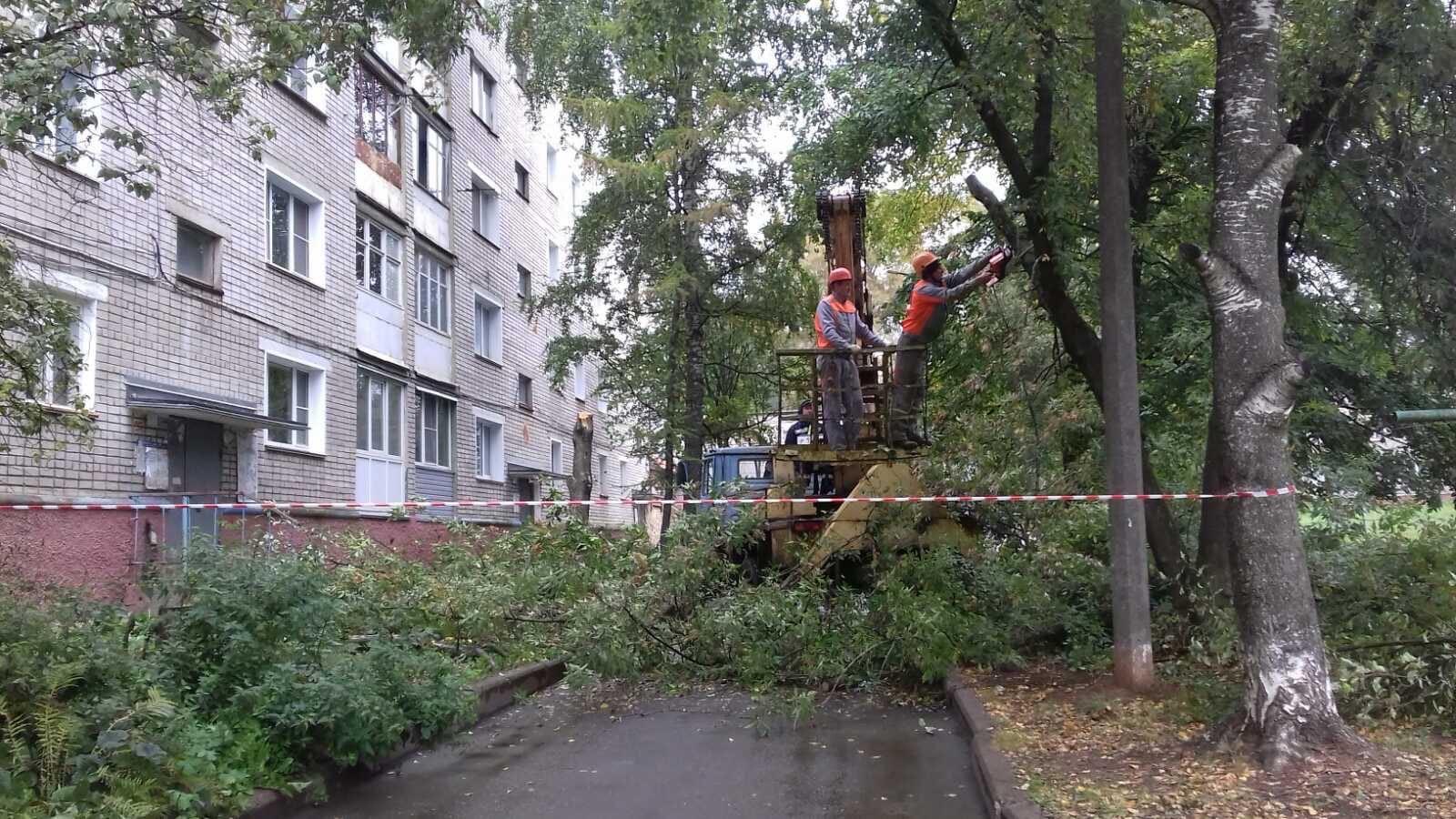 Улица Широнинцев дом 13. Снос и обрезка