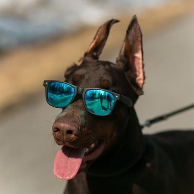 Одежда для собак купить в орле