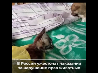 Защита о жестоком обращении с животными