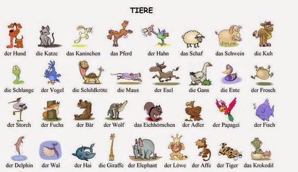 постер про животных на немецком конго живет
