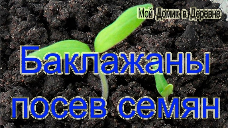 Баклажаны! Посев семян Составление грунта для рассады с почвоулучшителем ЦеоФлора