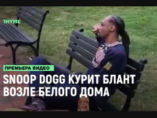 Snoop dogg курит блант возле белого дома [рифмы и панчи]