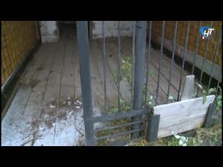 Новгородская мэрия и зоозащитники не могут договориться об открытии центра временного содержания животных