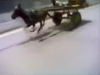 Конёк горбунок