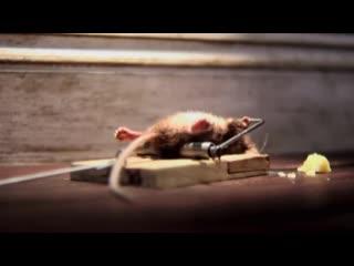 Bẩy chuột bá đạo nhất trong lịch sử bắt chuột của loài người