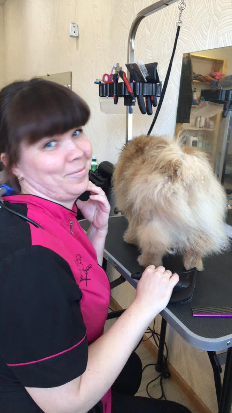 Live: Стрижка собак в Ярославле | Школа груминга