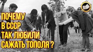 Почему вСССР повсюду сажали тополя?