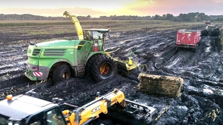 FORAGE HARVESTER in the MUD   2020 Corn Silage in France   Short History