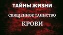Тайны жизни Священное таинство крови Голубая кровь