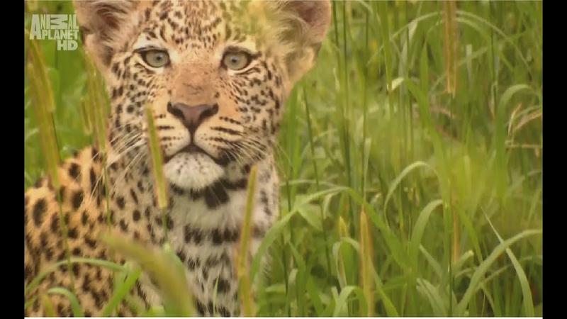Царство животных Документальный фильм Animal Planet Дикая природа Африки Animal Kingdom