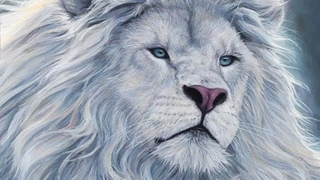 9 Животных с Невероятной Красотой