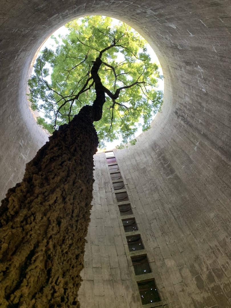 Дерево, растущее в забытой силосной башне