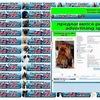 Ingrus.net международная база родословных собак