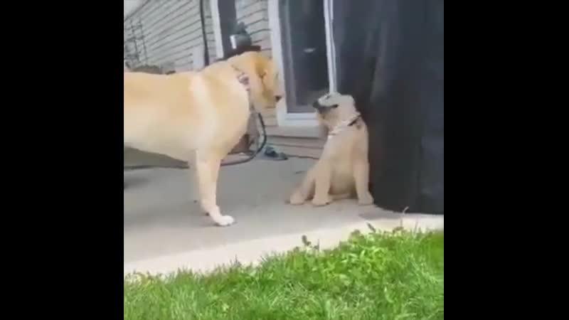 Мамочка ну не ругайся 😍