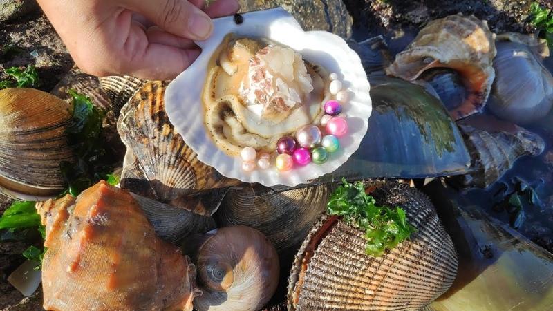 珍珠,开河蚌找珍珠,在一顆老河蚌中找到许多珍珠