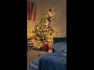 «Моя первая рождественская ёлка, и мой первый кот»<br /><br />r/#AnimalsBeingJerks