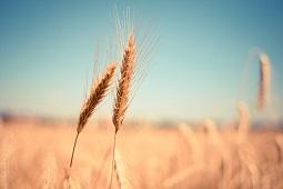 Регион отправил в 2019 году на экспорт рекордный объем сельхозпродукции