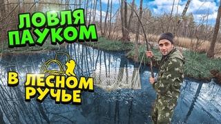 Жизнь в лесу! [4-Часть] Ловля на паук и руками в лесном ручье.Наловил малька линя и запустил в пруд