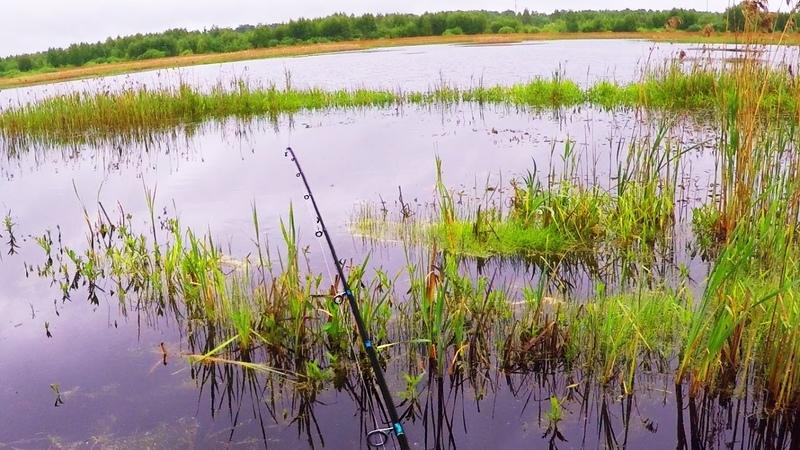 ЗДЕСЬ Я НЕ ОЖИДАЛ ПОЙМАТЬ ТАКОЕ Что это за ВОЛШЕБНОЕ МЕСТО Вот это рыбалка на спиннинг 3 Рыбалка на спиннинг осенью 2020 Ловля на спиннинг на реке Осень 2020 Речные монстры Рыбы много и разной РВУТСЯ ЛЕСКИ ГНУТСЯ БАГРЫ