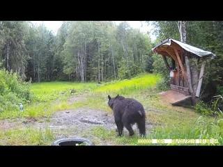 Медведица сходил как по малому, так и по большому