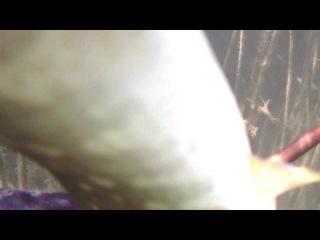 Подвоная охота на маныче 29 июля 2014 года