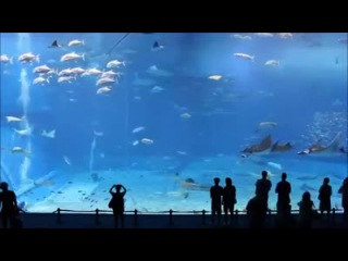 Японский океанариум