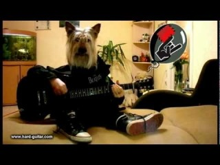 Happy Birthday Rock Song - Dog plays guitar - Funny Greeting Card - Guitar lesson