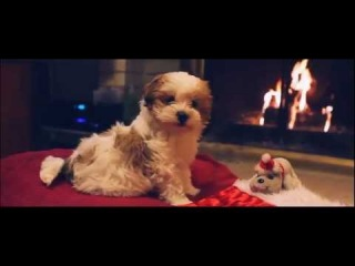 Puppy's First Christmas HD (Original) Let It Snow