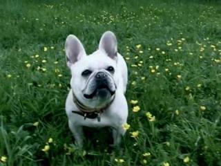 Dog eats, dog smiles :)