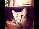 Смешные Прикольные Кошки 15