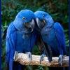 Комиксы форума «Синий Попугай»