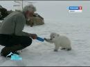 На острове Яя летчики нашли белого медвежонка