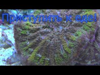 Обзор - Санкт-Петербургский Океанариум