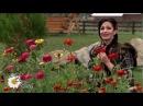 Viorica Macovei - Mai badita, floare rara