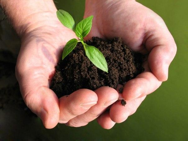 почва охрана почвы картинки что макро любой