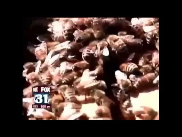 ChemTrails HAARP in den NEWS im TV UPDATE v4 Die PHAR m Aonen kündigen im TV ALLES an