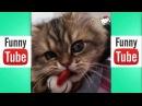 Самое смешное видео про кошек смешные коты приколы с котами, смешные видео с кот