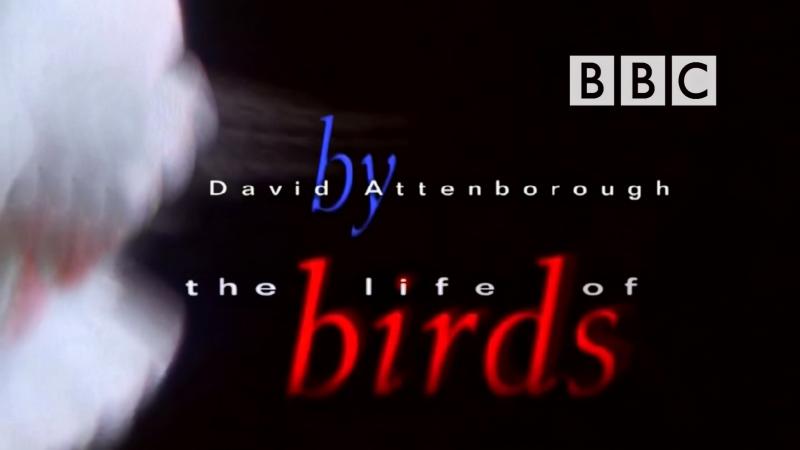 BBC Жизнь Птиц Фильм 4