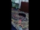 кот и вертолет
