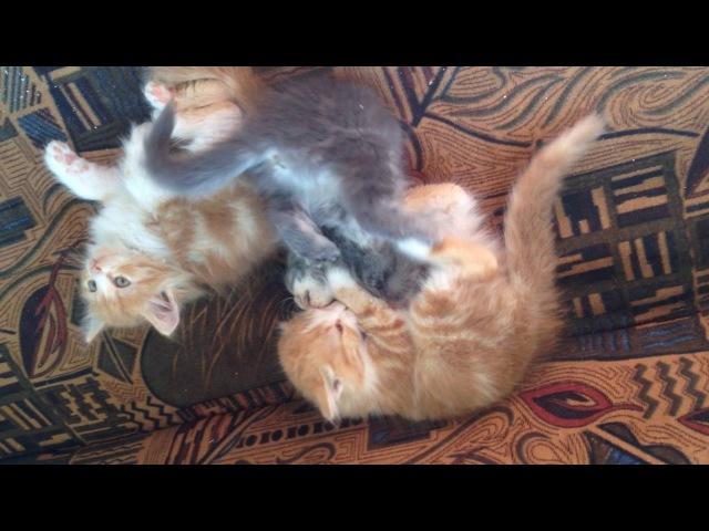 Віддам в добрі руки кошенят Прикольні коти Смешные коты