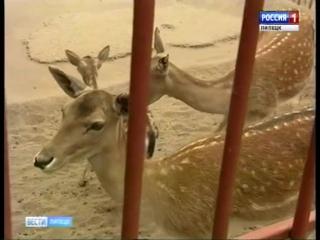 Зоопарк Липецка скоро снова пополнится