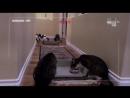 12 Адская кошка